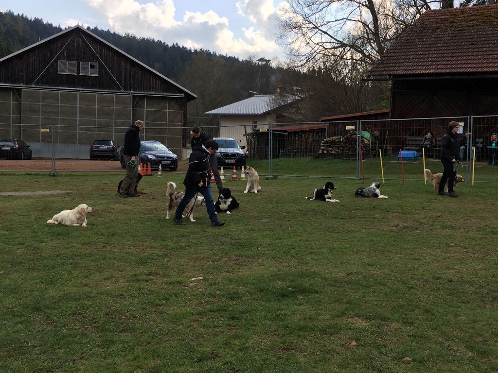 Hundeplatz (1)