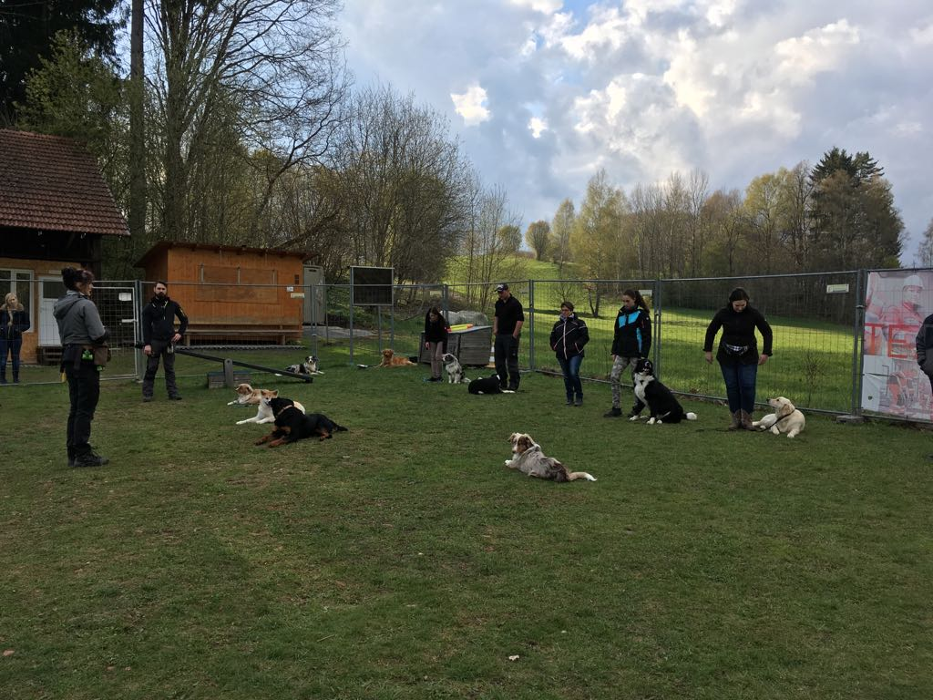 Hundeplatz (3)