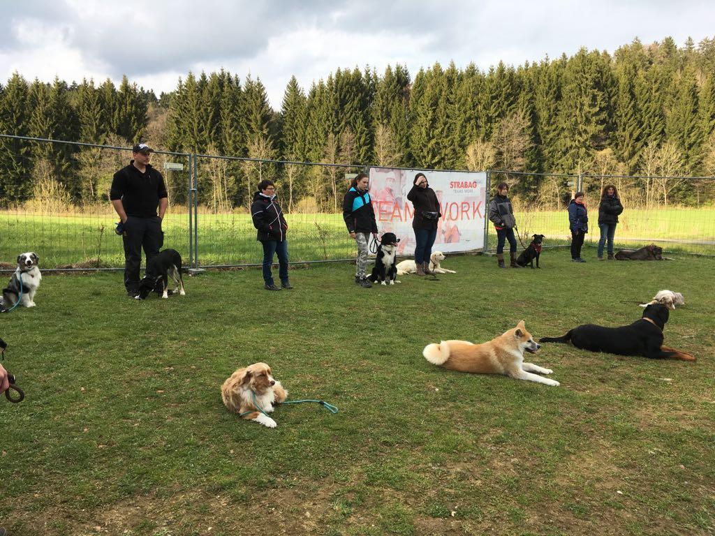 Hundeplatz (4)